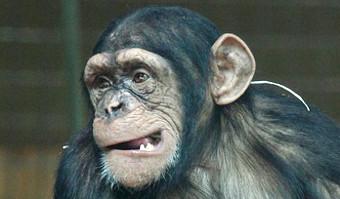 Alle Affenarten Der Welt