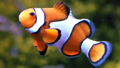 Fischarten informationen ber die fische der erde for Fische arten