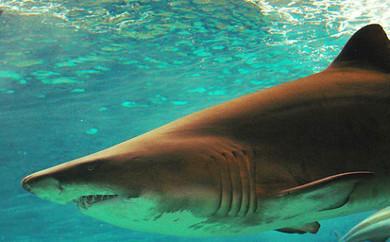 haifische in der nordsee