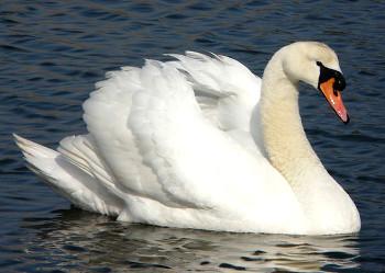 Vogelarten Wissenswertes über Die 10000 Vogel Arten Auf Unserer Erde
