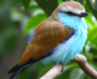 vogelarten wissenswertes ber die vogel arten auf unserer erde. Black Bedroom Furniture Sets. Home Design Ideas